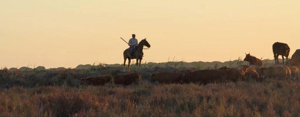Pferd und Reiter – Gemeinsames Leben und Arbeiten
