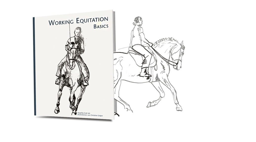 WORKING EQUITATION BASICS