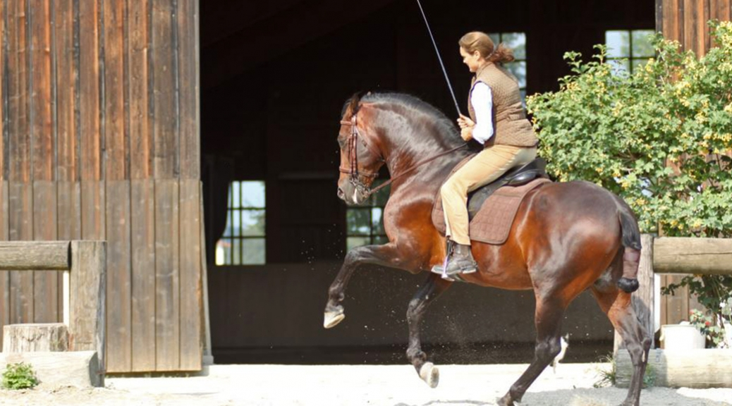 Angelika Graf: Working Equitation – Philosophie meiner Leidenschaft